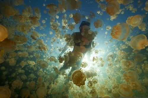 Hồ sứa nước mặn tuyệt đẹp ở Palau - 10