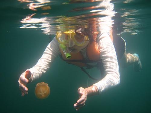 Hồ sứa nước mặn tuyệt đẹp ở Palau - 11