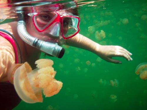 Hồ sứa nước mặn tuyệt đẹp ở Palau - 12