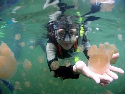 Hồ sứa nước mặn tuyệt đẹp ở Palau - 13