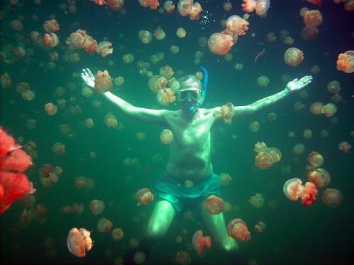 Hồ sứa nước mặn tuyệt đẹp ở Palau - 8