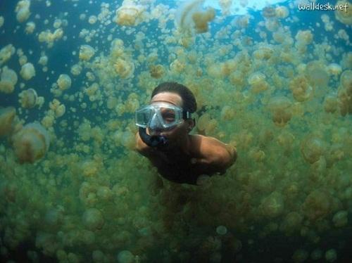 Hồ sứa nước mặn tuyệt đẹp ở Palau - 9