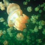 Du lịch - Hồ sứa nước mặn tuyệt đẹp ở Palau