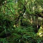 Du lịch - Khu rừng mê cung bí hiểm ở Anh quốc