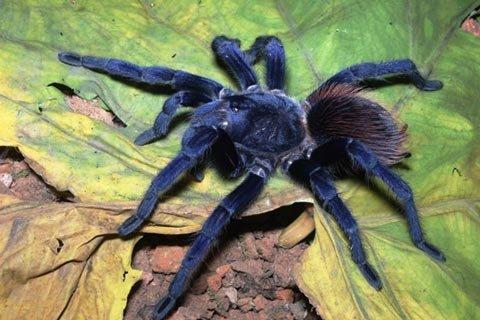 10 loài mới được phát hiện năm qua - 1