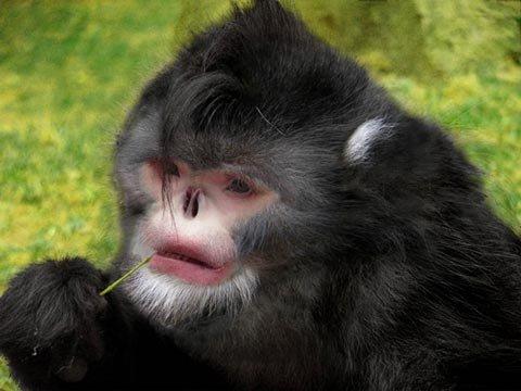 10 loài mới được phát hiện năm qua - 2