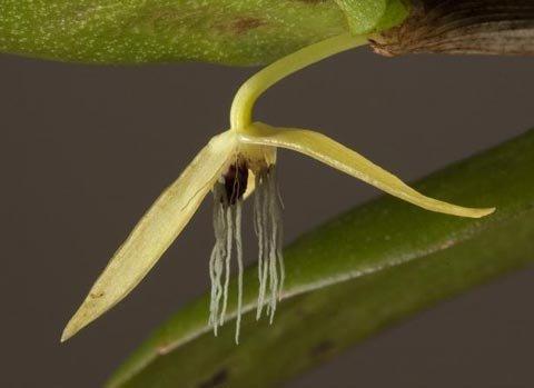 10 loài mới được phát hiện năm qua - 5