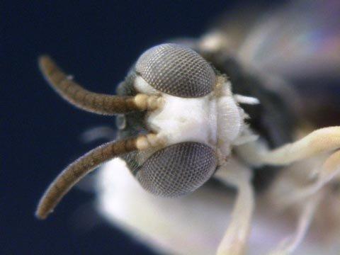 10 loài mới được phát hiện năm qua - 6