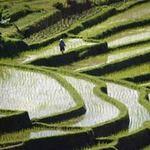 Du lịch - Những bức tranh đồng ruộng đẹp tuyệt trên thế giới