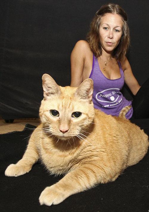 Chú mèo béo nhất thế giới - 3