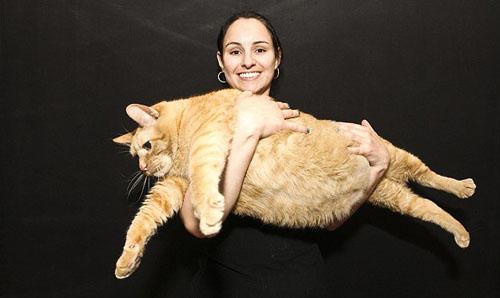 Chú mèo béo nhất thế giới - 1