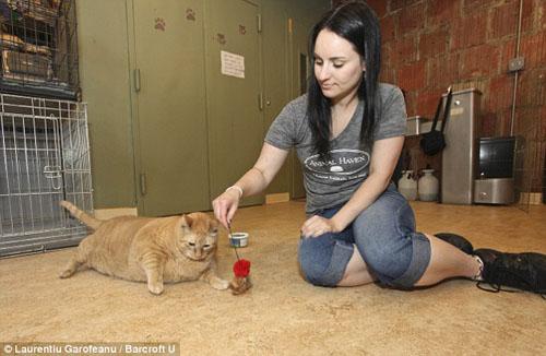 Chú mèo béo nhất thế giới - 8