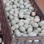 Tin tức trong ngày - TQ: Phát hiện trứng có chất gây ung thư