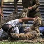 Tin tức trong ngày - Ấn Độ: Báo hoang tấn công hàng chục người