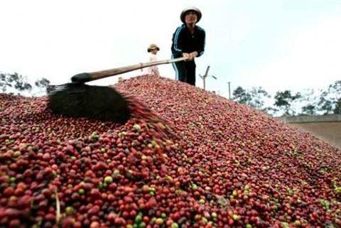 """Giá cà phê """"lội ngược dòng"""" thế giới - 1"""