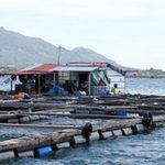 Thị trường - Tiêu dùng - Phạt chủ bè TQ ở vịnh Cam Ranh 4 triệu đồng
