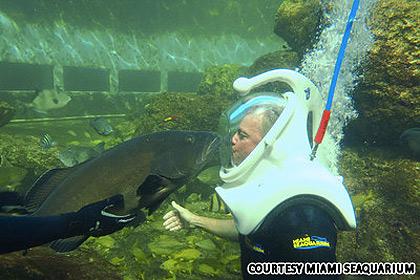6 điểm đến kỳ thú dưới nước - 4