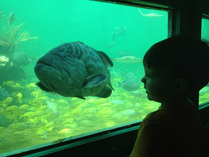 6 điểm đến kỳ thú dưới nước - 3