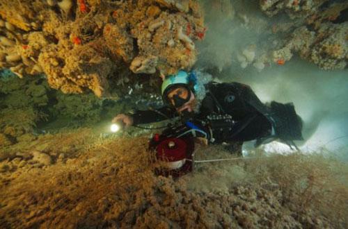 Những hang động kỳ thú dưới đáy biển Bahamas - 9