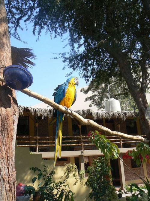 Hucachina - thiên đường nhỏ ở Peru - 5