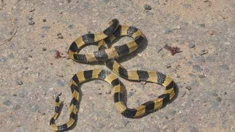 Hoảng loạn vì rắn độc bò khắp xe khách - 2