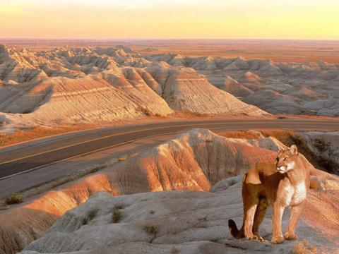 Ngắm 10 khu vườn quốc gia hùng vĩ nhất nước Mỹ - 4