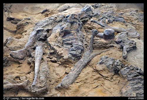 Công viên hóa thạch khủng long lớn nhất Thế giới - 7