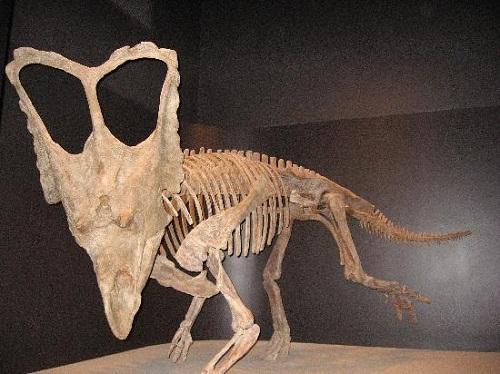 Công viên hóa thạch khủng long lớn nhất Thế giới - 8