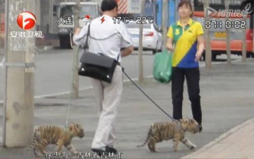 Chàng trai dắt hổ đi dạo - 1