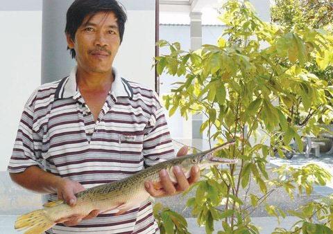 Bắt được cá vảy rắn, đầu cá sấu ở Khánh Hòa - 1