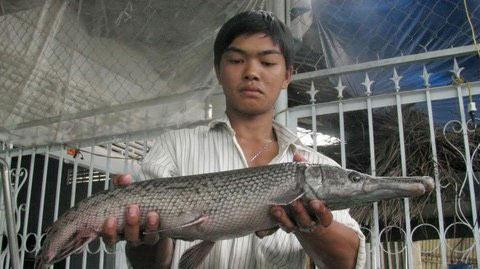 Bắt được cá vảy rắn, đầu cá sấu ở Khánh Hòa - 2
