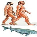 Phi thường - kỳ quặc - Tổ tiên của con người là... cá mập?