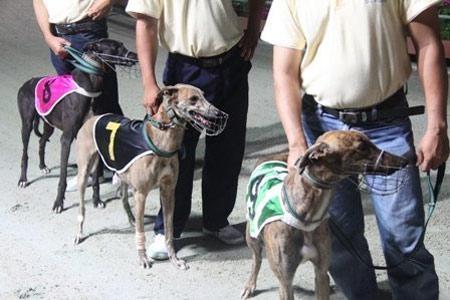 Đi xem đua chó ở Vũng Tàu - 10
