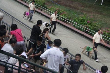 Đi xem đua chó ở Vũng Tàu - 12
