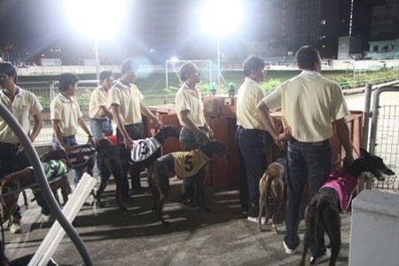 Đi xem đua chó ở Vũng Tàu - 4
