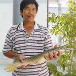 Phi thường - kỳ quặc - Khánh Hòa: Bắt được con cá đầu cá sấu, vảy rắn