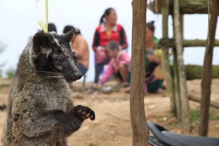Hãi hùng cảnh người Việt phanh thây khỉ - 13