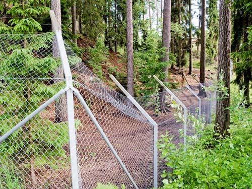 Thụy Điển: Bầy sói vồ chết nhân viên sở thú - 1