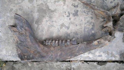 Phát hiện bộ xương lạ ở Cà Mau - 1