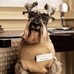 Phi thường - kỳ quặc - Dịch vụ chó làm bác sĩ tâm lý
