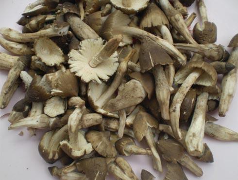 Nấm mối cuốn lá lốt nướng ngon đúng điệu - 1