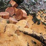 """Tin tức trong ngày - Đột nhập """"công trường"""" tàn phá rừng"""