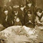 Thế giới - Bức ảnh vô giá về chú chó huyền thoại ở Nhật