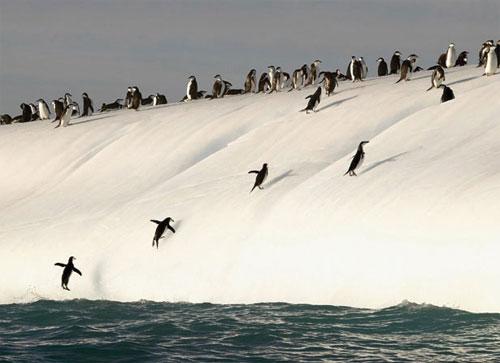 Vẻ đẹp hùng vĩ của đại dương - 3