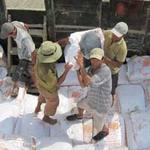 Thị trường - Tiêu dùng - Giá lúa gạo nội địa chao đảo