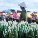 Du lịch - Mãn nhãn với chợ hoa đêm Quảng Bá