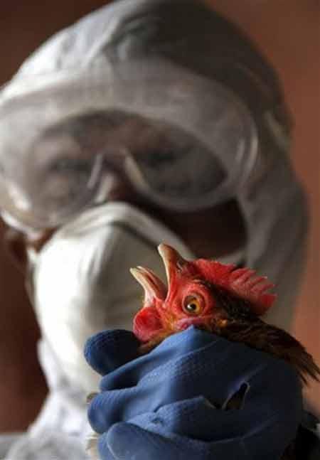H5N1 lây từ người sang người qua không khí - 1