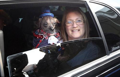 Tưng bừng cuộc thi chú chó xấu nhất thế giới - 2