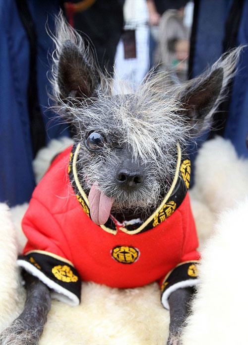 Tưng bừng cuộc thi chú chó xấu nhất thế giới - 5