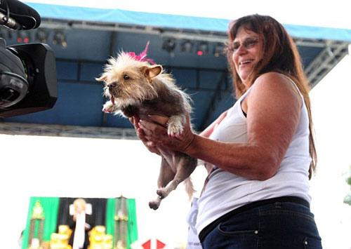 Tưng bừng cuộc thi chú chó xấu nhất thế giới - 9